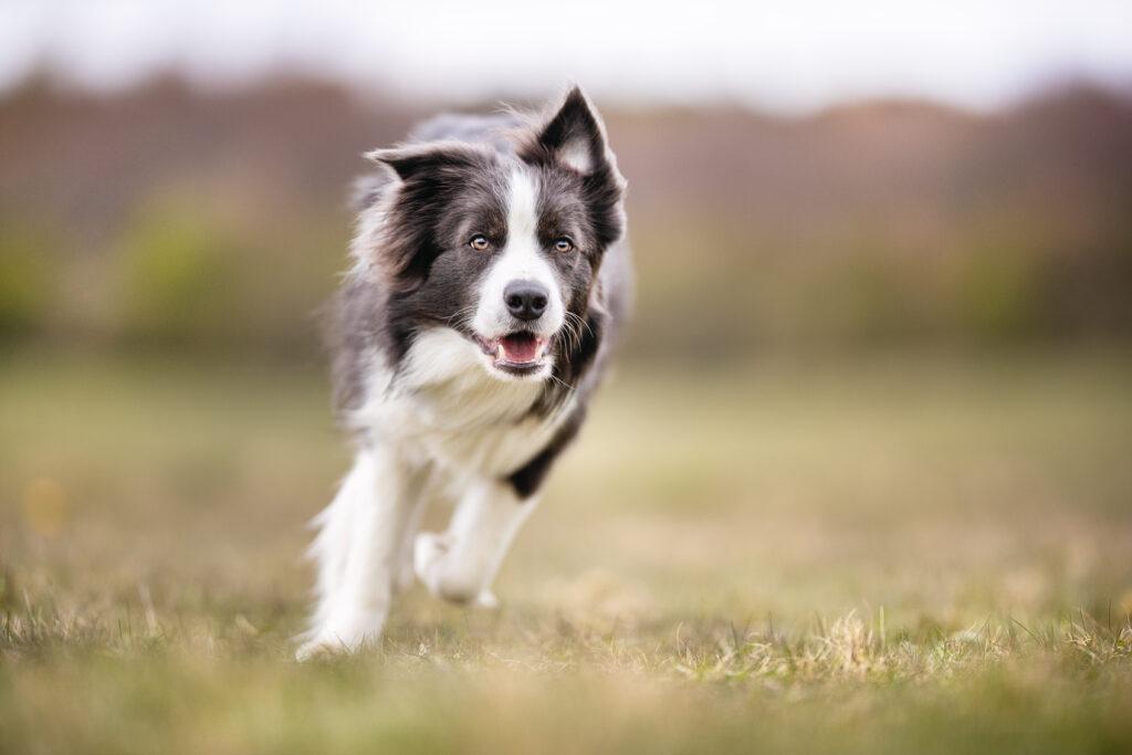 L'Alimentazione per il cane sportivo o in attività