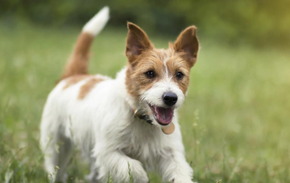 Benessere di lungo periodo: il cane adulto