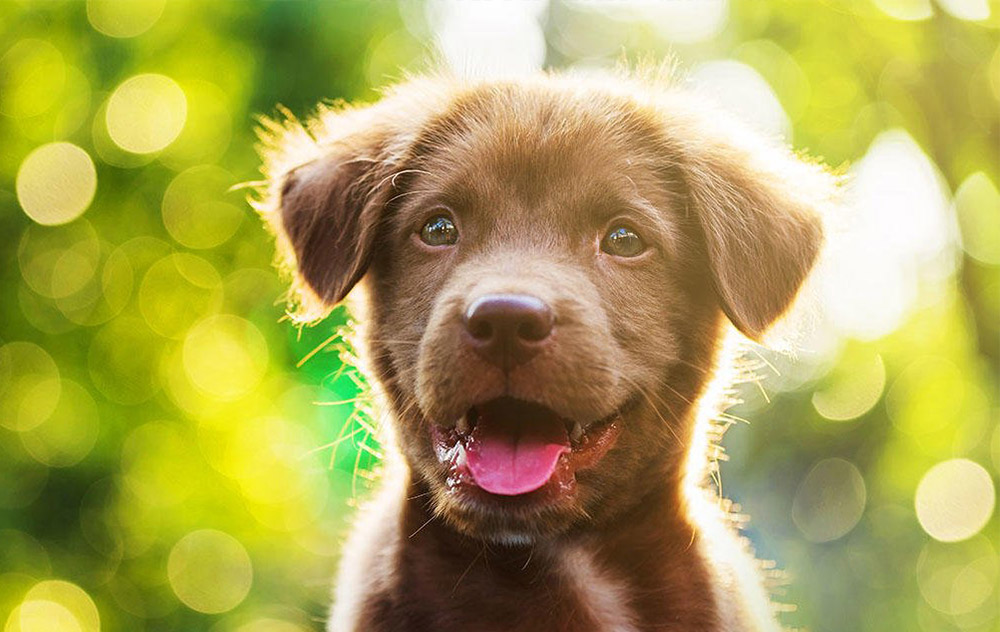 Il cucciolo… quando nasce un'esigenza nutrizionale