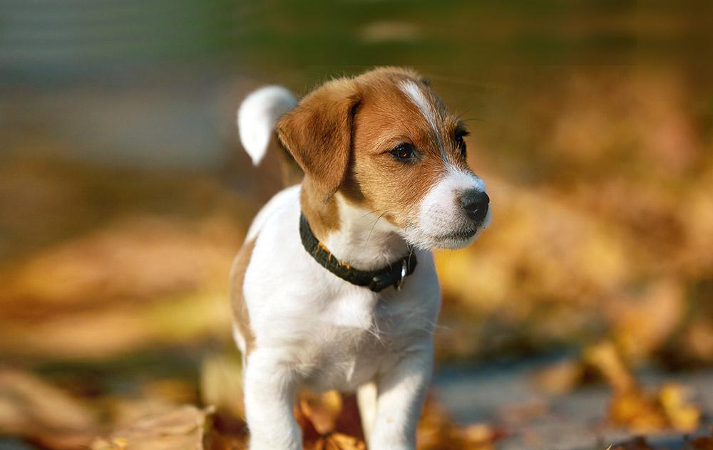 La crescita del cucciolo… un'avventura straordinaria