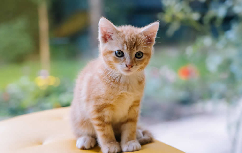 Il gattino: solide basi per la crescita