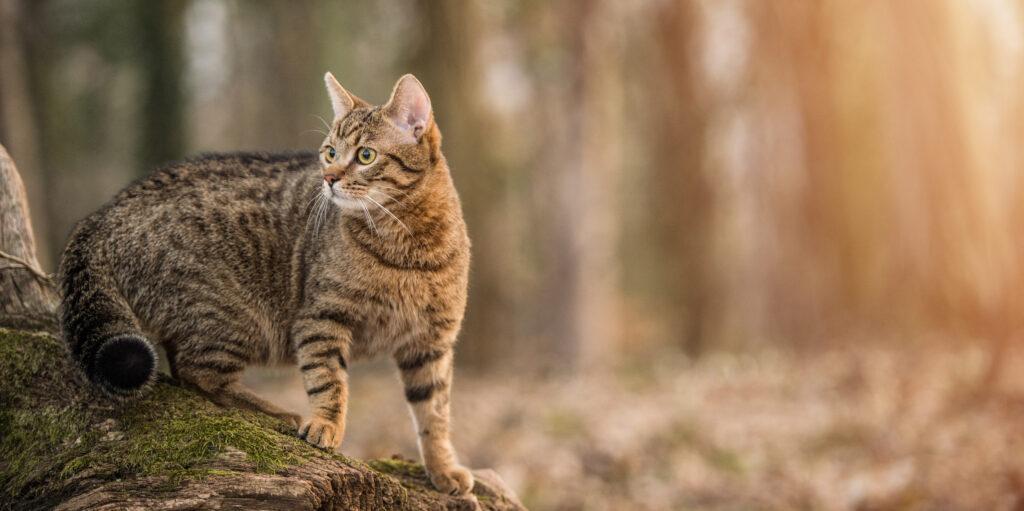 L'alimentazione multiproteica del gatto adulto