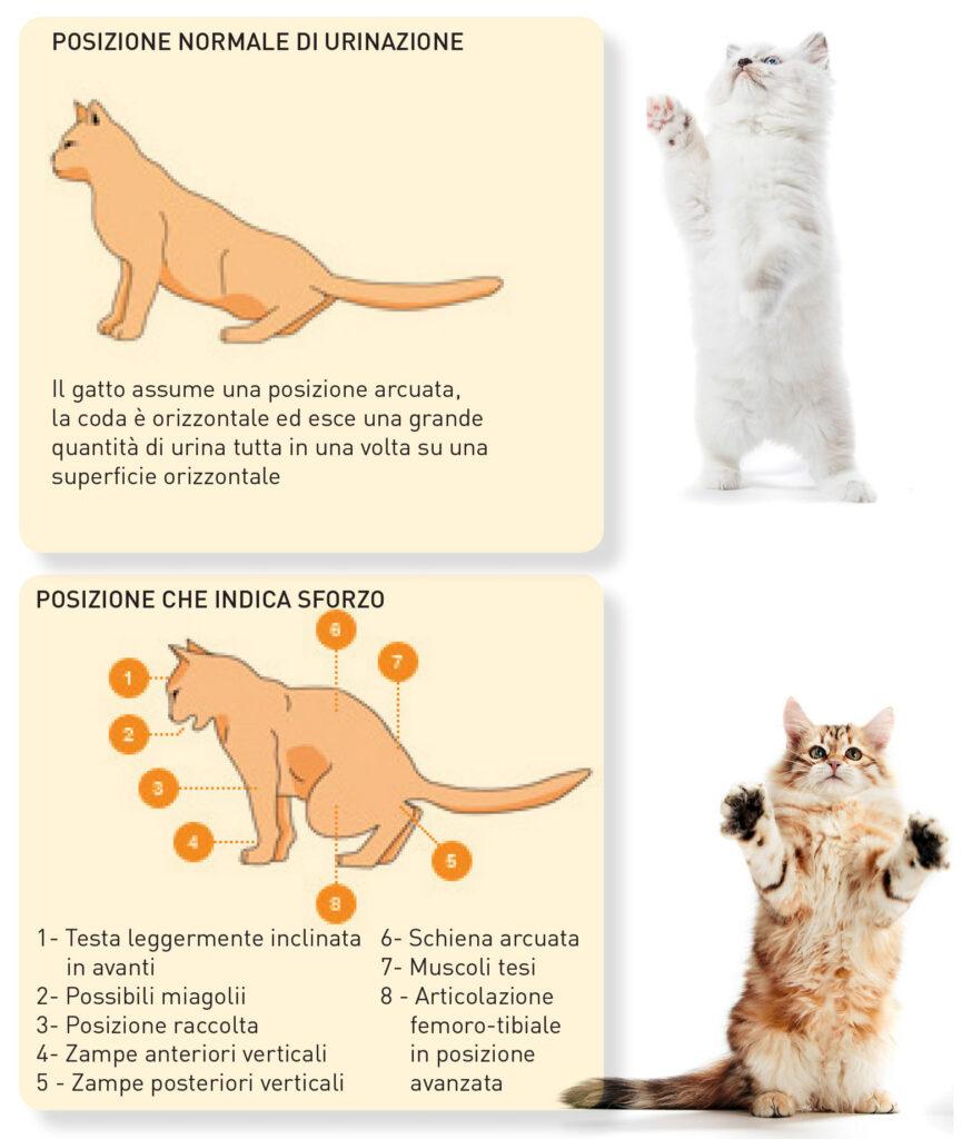 I calcoli di ossalati di calcio nel gatto