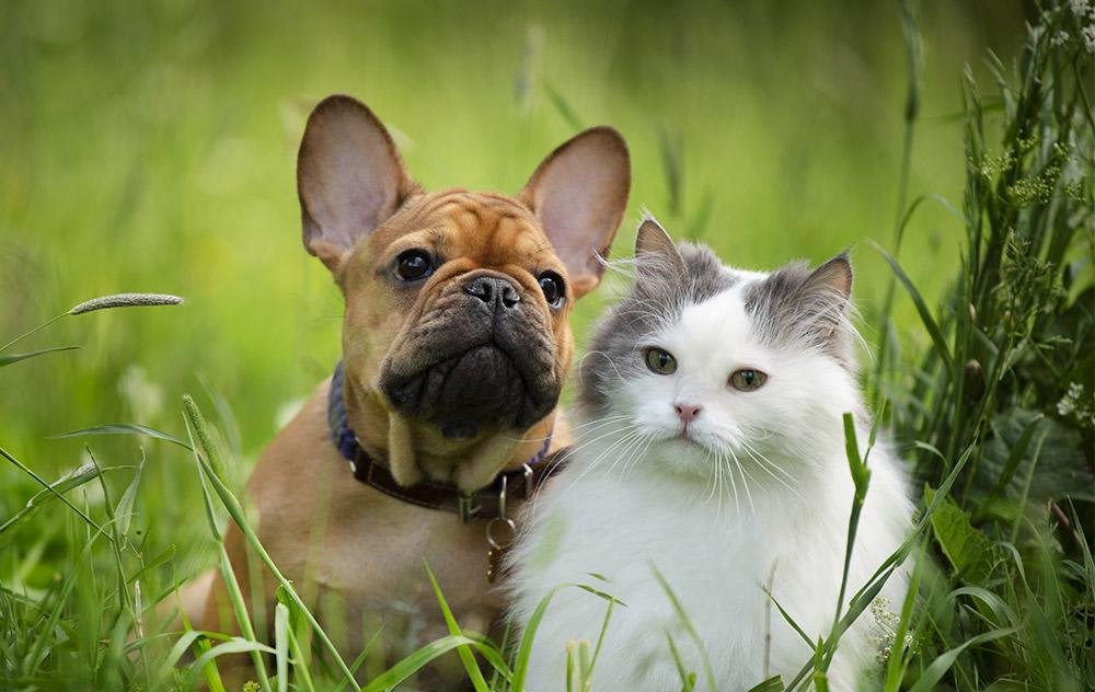 Il Diabete mellito può minacciare la salute del tuo cane e gatto