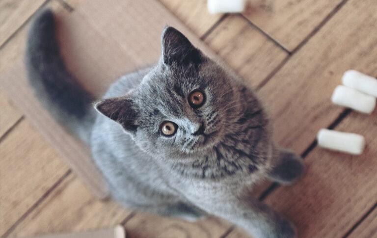 COnoscere il gatto