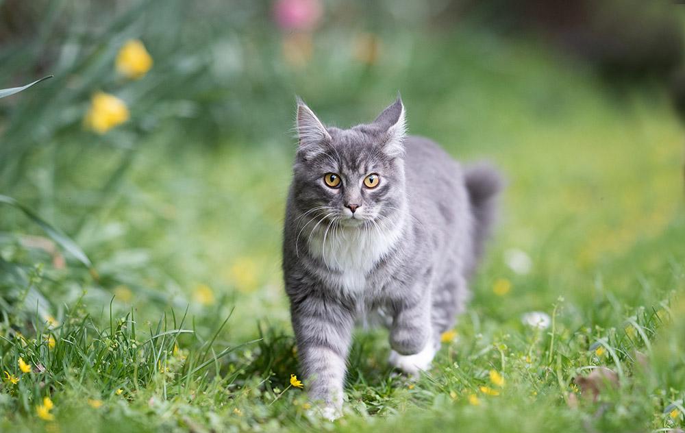 Conoscere il gatto – adeguare la scelta nutrizionale