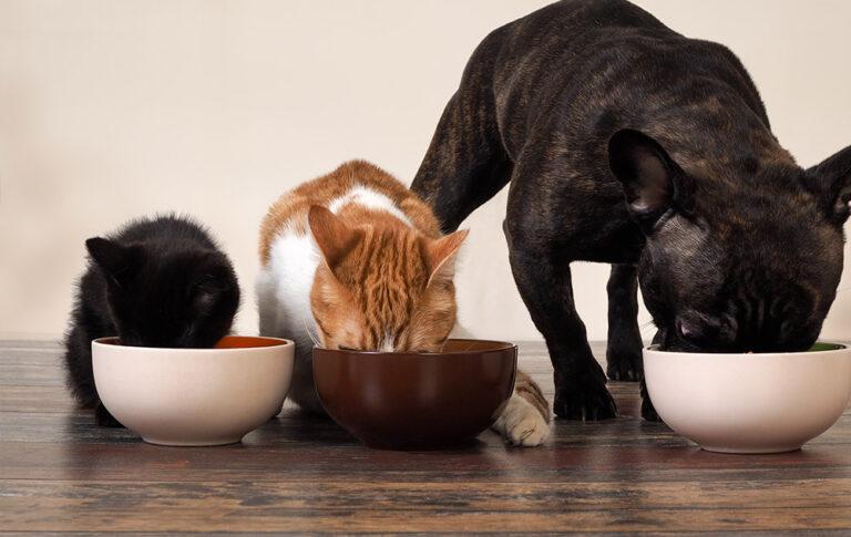 Pet Food - proteine