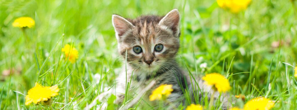 Salute e benessere del gattino