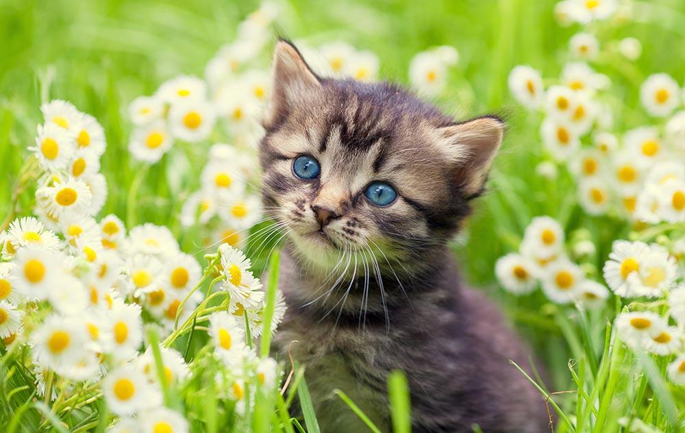 La crescita del gattino