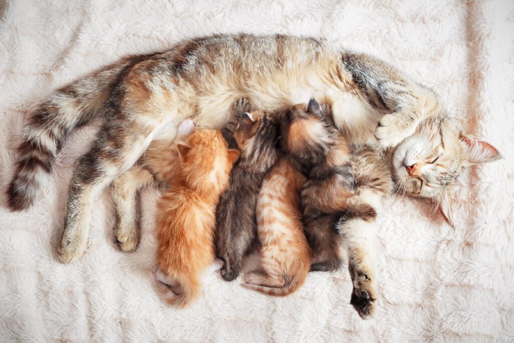 Come accogliere il gattino in casa
